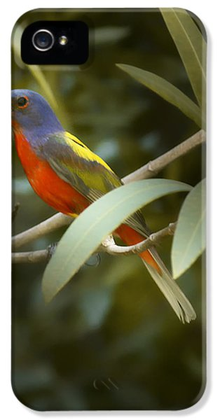 Painted Bunting Male IPhone 5 Case by Phill Doherty