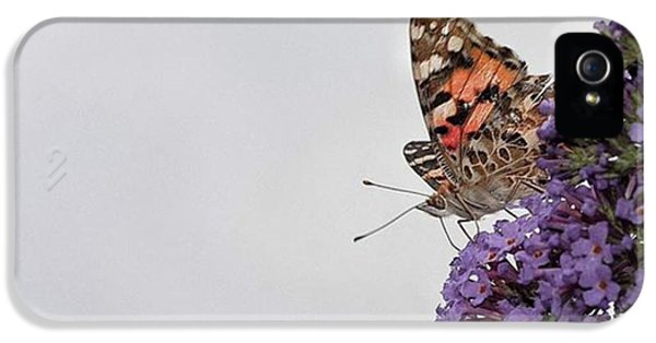 iPhone 5 Case - Painted Lady (vanessa Cardui) by John Edwards