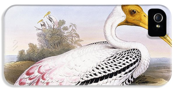 Painted Stork IPhone 5 Case by John Gould
