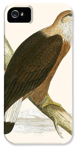 Pallas's Sea Eagle IPhone 5 / 5s Case by English School