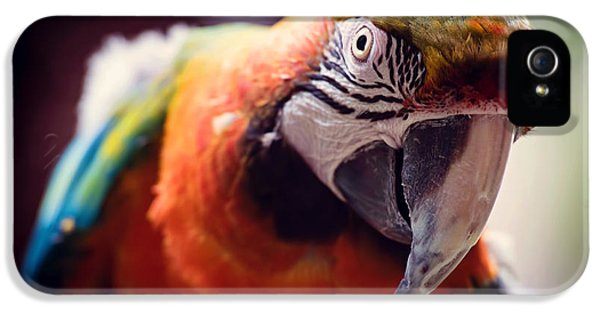 Parrot iPhone 5 Case - Parrot Selfie by Fbmovercrafts