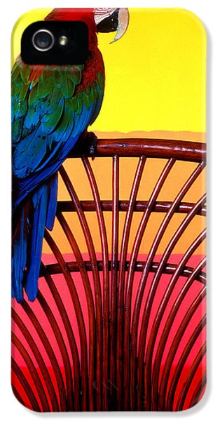 Parrot Sitting On Chair IPhone 5 Case by Garry Gay