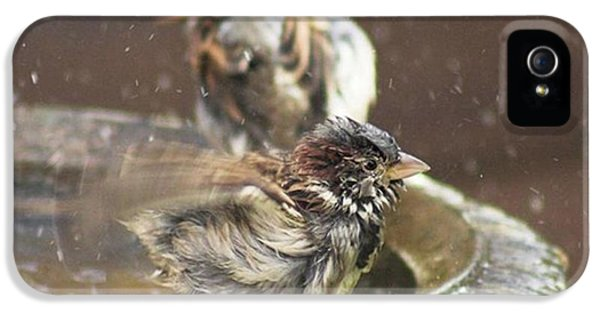 iPhone 5 Case - Pass The Towel Please: A House Sparrow by John Edwards