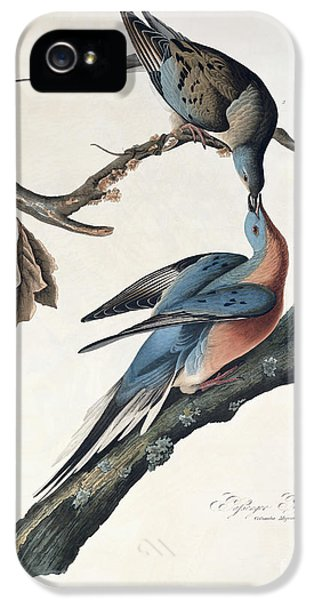 Passenger Pigeon IPhone 5 Case by John James Audubon