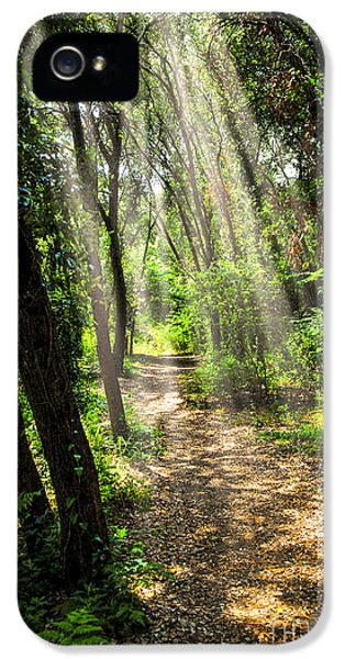 Path In Sunlit Forest IPhone 5 Case