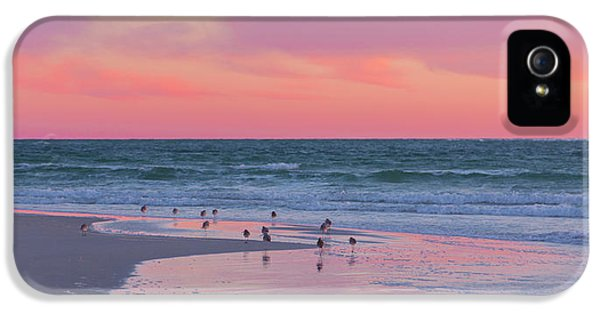Sandpiper iPhone 5 Case - Peaceful Witnesses  by Betsy Knapp