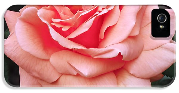 Peach Rose IPhone 5 / 5s Case by Rona Black