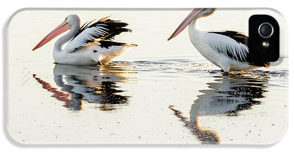 Pelicans At Dusk IPhone 5 Case by Werner Padarin