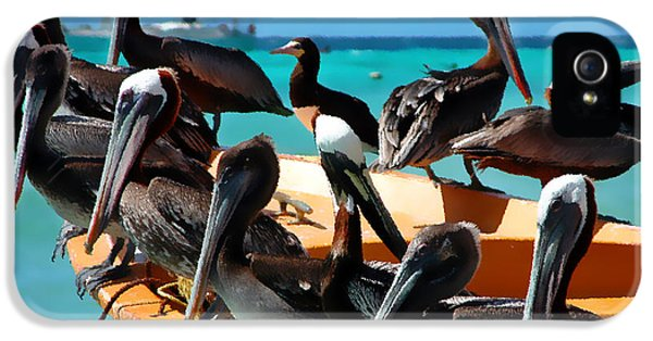 Pelicans On A Boat IPhone 5 Case