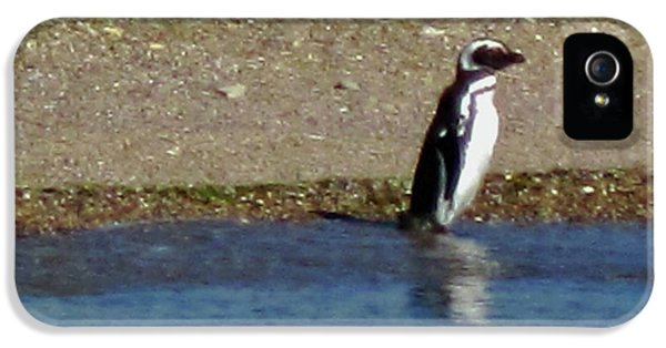 Penguin On The Beach IPhone 5 / 5s Case by Sandy Taylor