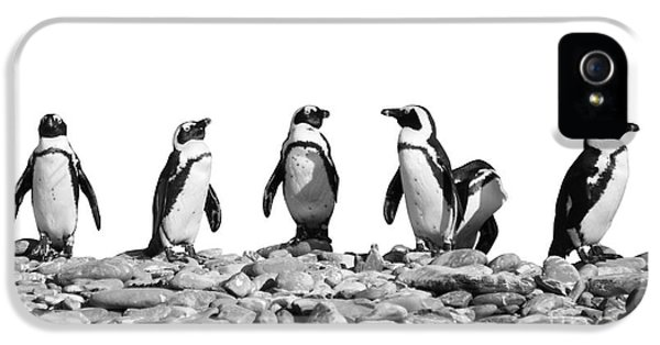 Penguins IPhone 5 Case by Delphimages Photo Creations
