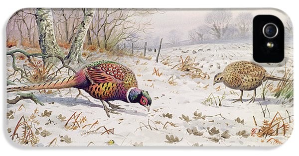Pheasant And Partridge Eating  IPhone 5 Case by Carl Donner