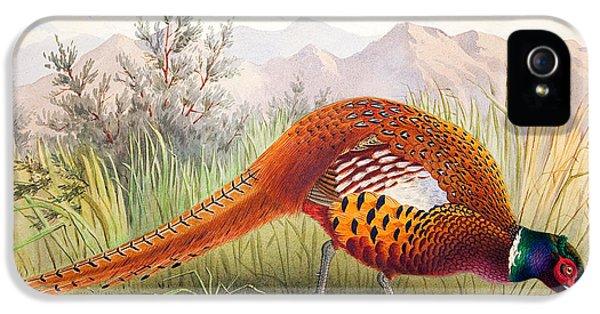 Pheasant IPhone 5 Case