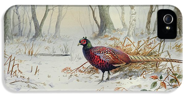 Pheasants In Snow IPhone 5 Case by Carl Donner