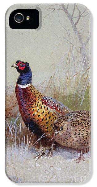 Pheasants In The Snow IPhone 5 Case by Archibald Thorburn