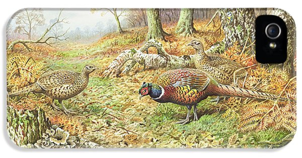 Pheasants With Blue Tits IPhone 5 Case by Carl Donner