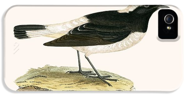 Pied Wheatear IPhone 5 / 5s Case by English School