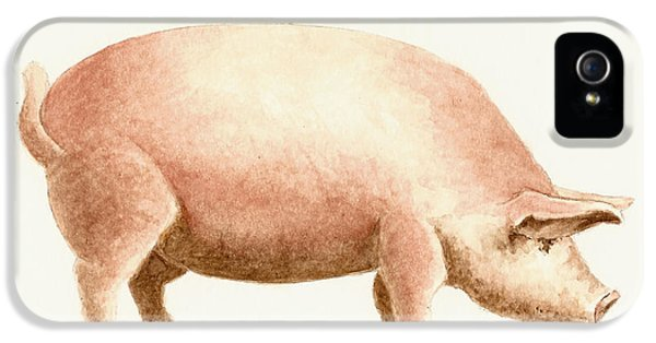 Pig iPhone 5 Case - Pig by Michael Vigliotti