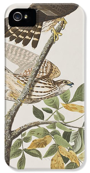 Pigeon Hawk IPhone 5 / 5s Case by John James Audubon