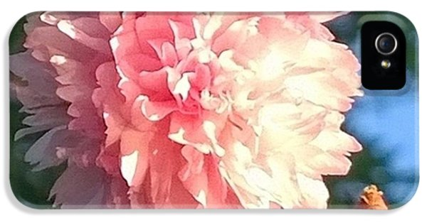 Pink Flower Bloom In Sunset. #flowers IPhone 5 Case