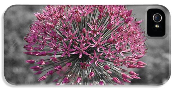 Pink Flower IPhone 5 Case by Konstantin Sevostyanov