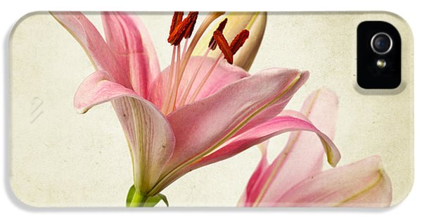 Lily iPhone 5 Case - Pink Lilies by Nailia Schwarz