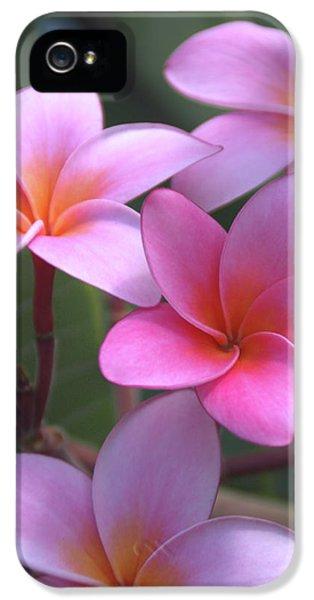 Pink Plumeria IPhone 5 Case