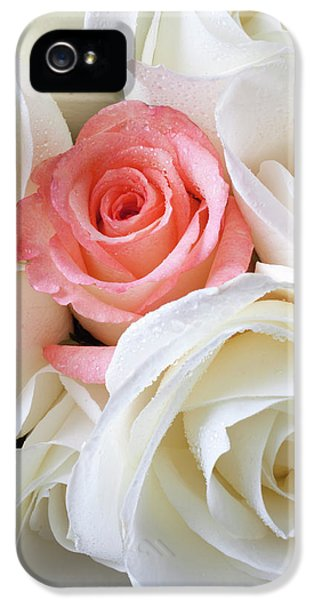 Pink Rose Among White Roses IPhone 5 Case