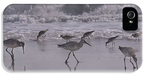 Sandpiper iPhone 5 Case - Piper Paradise by Betsy Knapp