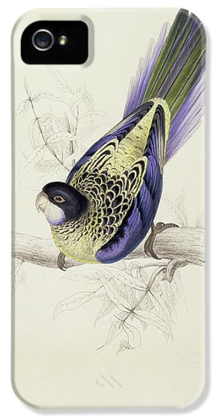 Parakeet iPhone 5 Case - Platycercus Brownii, Or Browns Parakeet by Edward Lear