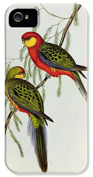 Lovebird iPhone 5 Case - Platycercus Icterotis by John Gould
