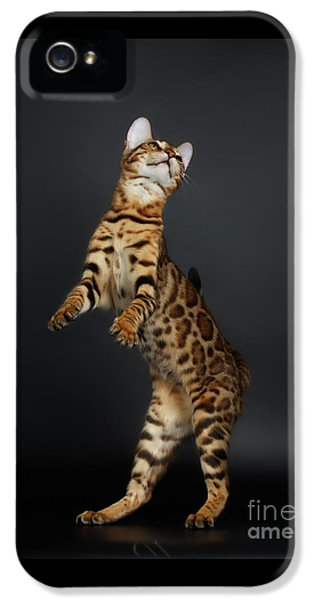 Playful Female Bengal Cat Stands On Rear Legs IPhone 5 Case by Sergey Taran