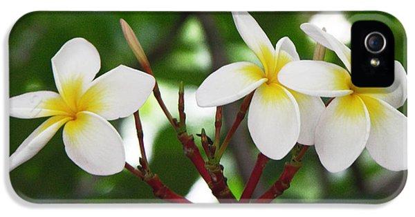 Plumeria Flower iPhone 5 Case - Plumeria After The Rain by Kathleen Wong
