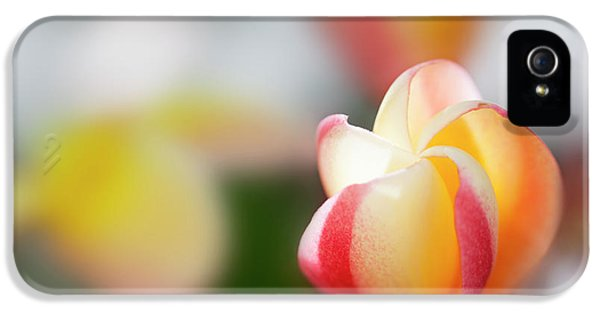 Plumeria Bloom IPhone 5 Case by Sean Davey