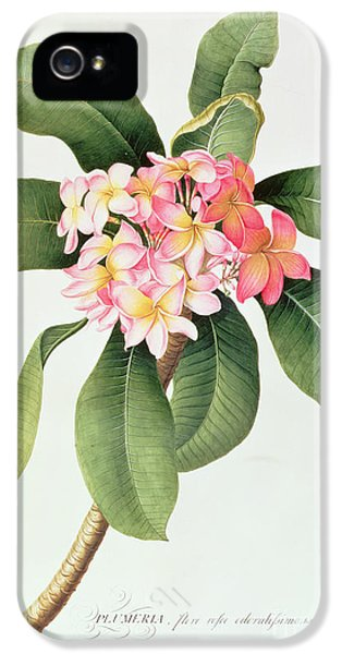 Plumeria IPhone 5 Case by Georg Dionysius Ehret