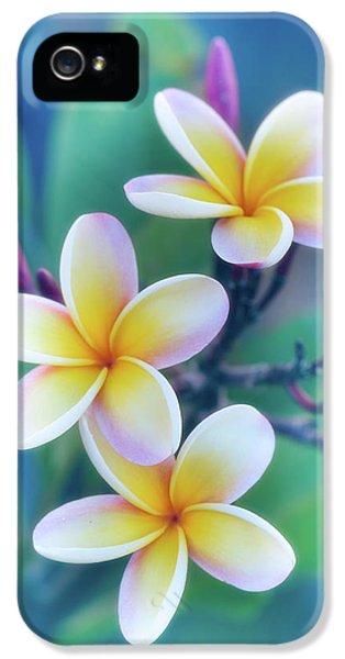 Plumeria Flower iPhone 5 Case - Plumerias In Pastel by Jade Moon