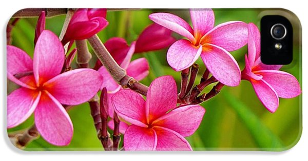 Plumeria  IPhone 5 Case by John Clark