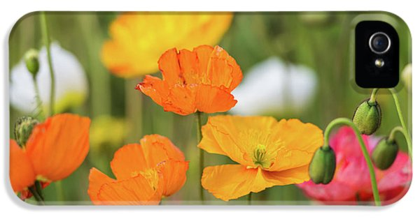 IPhone 5 Case featuring the photograph  Poppies 1 by Werner Padarin