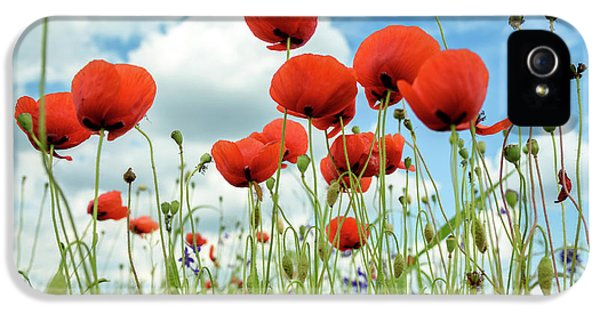 Poppies In Field IPhone 5 Case by Jelena Jovanovic