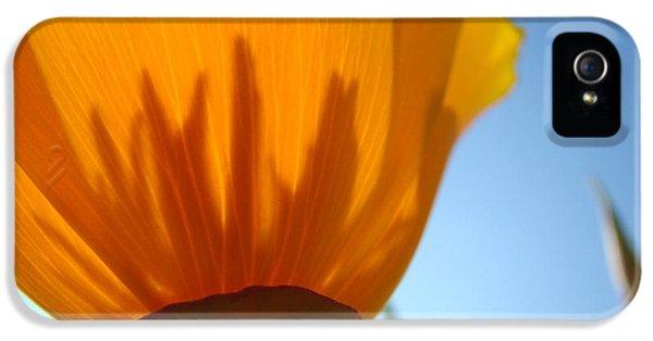 Poppies Sunlit Poppy Flower 1 Wildflower Art Prints IPhone 5 Case by Baslee Troutman