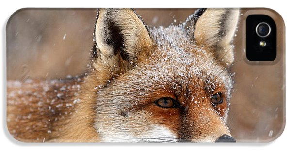 Portrait Of A Red Fox In A Snow Storm IPhone 5 Case