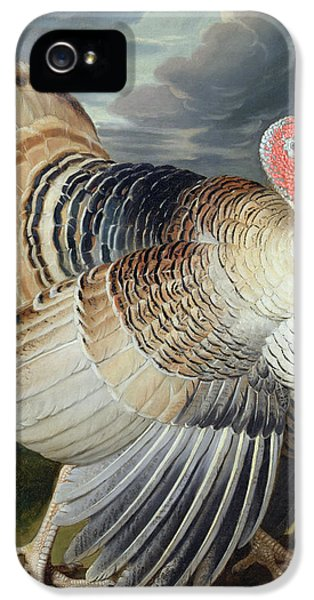 Portrait Of A Turkey  IPhone 5 / 5s Case by Johann Wenceslaus Peter Wenzal