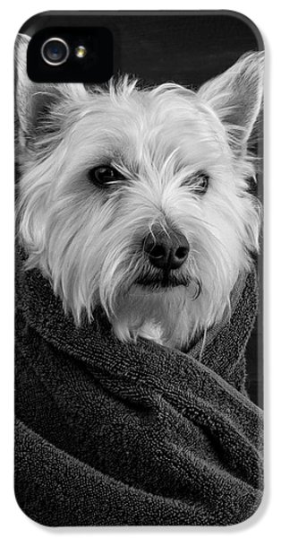 Portrait Of A Westie Dog IPhone 5 Case by Edward Fielding