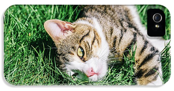 Portrait Of Cute Domestic Tabby Cat Playing In Grass IPhone 5 Case