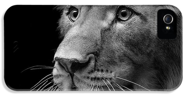Portrait Of Lion In Black And White II IPhone 5 Case
