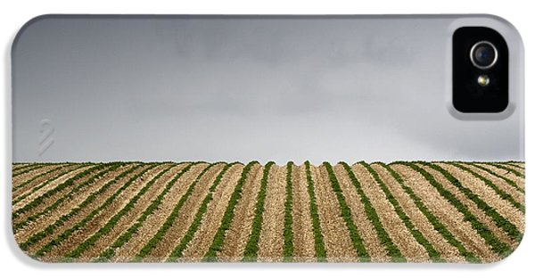 Potato Field IPhone 5 / 5s Case by John Short