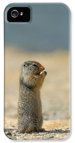 Prairie Dog IPhone 5 / 5s Case by Sebastian Musial