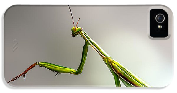 Insect iPhone 5 Case - Praying Mantis  by Bob Orsillo