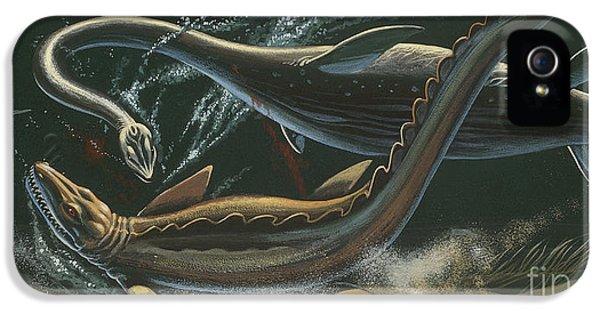 Prehistoric Marine Animals, Underwater View IPhone 5 Case by American School