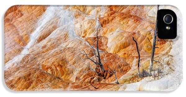 Prehistoric Trees IPhone 5 Case by Todd Klassy